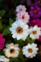 priorità bassa del fiore foto