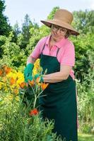 donna di mezza età che innaffia i gigli arancioni. foto