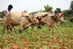 aratura del contadino