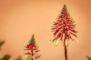 potere dei fiori foto