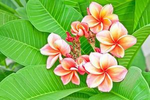 bellissimi fiori foto