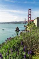 golden gate bridge di san francisco con fiori di primo piano viola
