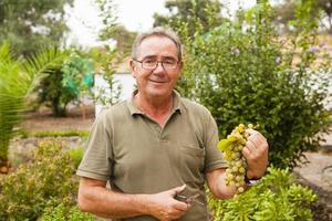 Ritratto di uomo anziano sorridente con un raccolto di uva.