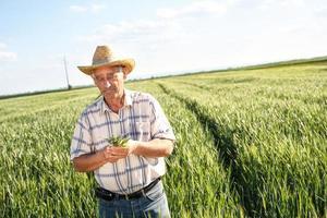 agricoltore senior in un campo esaminando il raccolto