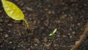 crescita del semenzale foto