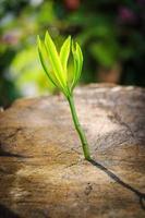 nuova crescita dell'albero su su albero morto come concetto di affari foto