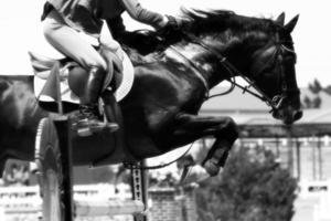 attraversando l'ostacolo - tema equestre (b & n) foto