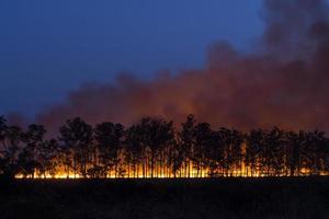 fuoco controllato foto