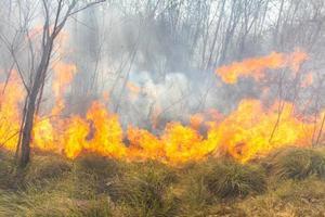 incendio boschivo tropicale foto