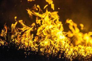 fuoco nella boscaglia foto