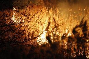 wildfire foto