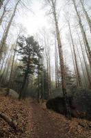 foresta nebbiosa di pioppo tremulo in autunno foto