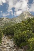 percorso verso le montagne. foto