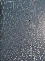 web scintillante
