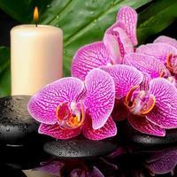 concetto di spa di pietre zen con gocce, ramoscello fiorito foto