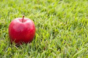 mela rossa sull'erba foto