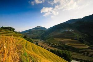campo di riso a terrazze foto