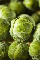 cavoletti di Bruxelles organici verdi crudi foto