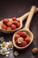 fragola in un cucchiaio di legno e fiori di camomilla foto