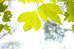 foglie prese con retroilluminazione