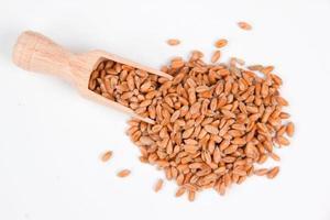 semi di grano foto