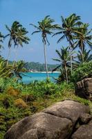 vista sul mare con palme e pietre, verticale foto