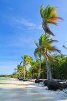palme sulla spiaggia foto