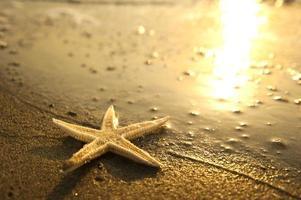 stella marina sulla spiaggia foto