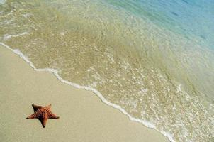 étoile de mer foto