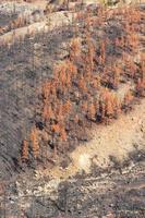distruzione della foresta da parte di un incendio