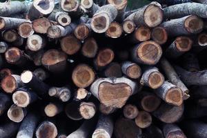 pila di tronchi di legno foto
