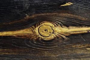 taglio di trama di un albero foto