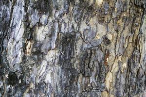 legno di corteccia foto