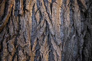 trama di corteccia di albero marrone scuro foto