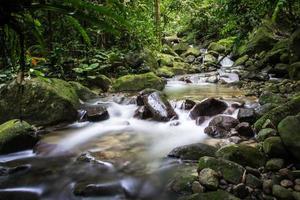 flusso nella foresta pluviale foto