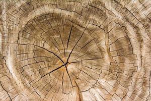 struttura di legno sfondo / struttura di legno foto