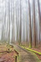 nebbia nella foresta foto