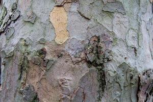 asse di legno in legno sfondo
