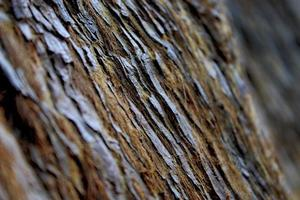 corteccia d'albero foresta di legno rosso