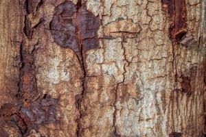 struttura di legno (alberi dalla foresta) foto
