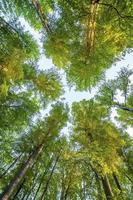 alberi forestali. Sfondi di natura verde e legno del sole