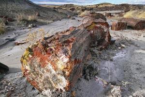 legno pietrificato del periodo triassico nella foresta pietrificata foto