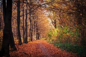 alberi forestali autunnali. Sfondi di natura verde e legno del sole foto