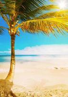 spiaggia tropicale del mare delle Hawai di arte foto