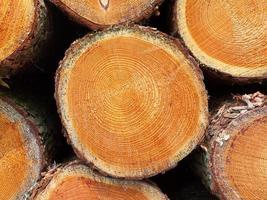 legname impilato in una foresta olandese foto