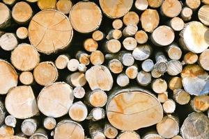 pila di tronchi foto