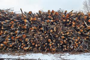 pila di tronchi sulla foresta foto