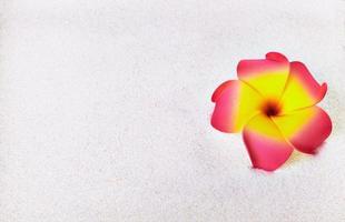 fiore tropicale foto