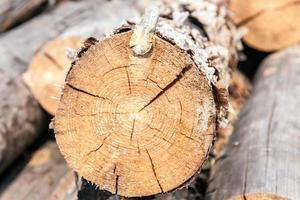 tronchi di pino impilati foto