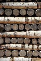 muro da tronchi di betulla foto